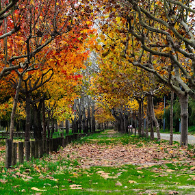 Aquelas cores by Carlos Costa - City,  Street & Park  City Parks ( tress, park, pateira, autumn, colors, green, fall, yellow, portugal, leaves,  )