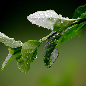 by Maithili Saoji - Nature Up Close Flowers - 2011-2013 ( after the first rain )