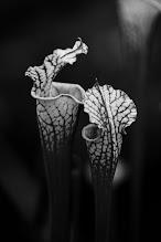 Photo: the conversation  #flowerphotography  #bwphotography  #blackandwhitephotography  #monochromephotography