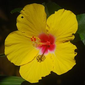 Pretty by Jane Sherwin - Flowers Single Flower