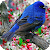 Puzzle - Birds file APK for Gaming PC/PS3/PS4 Smart TV
