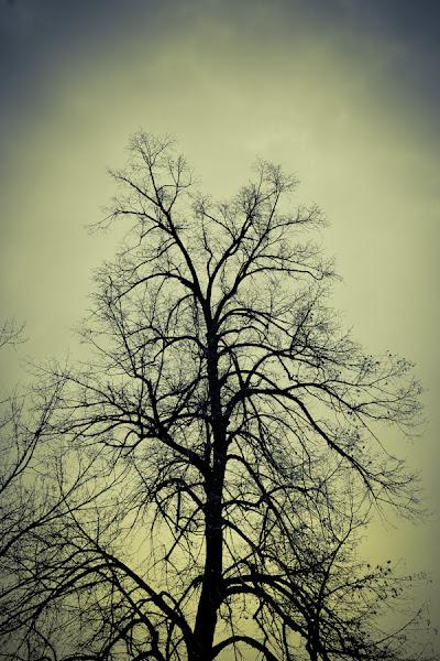 Photo: Not a metaphor