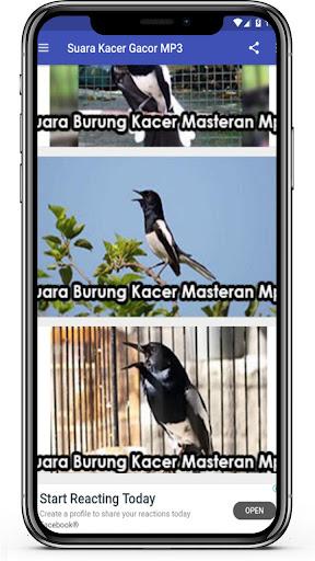 Suara Kacer Gacor Mp3 Offline Masteran Kacer App Store Data Revenue Download Estimates On Play Store