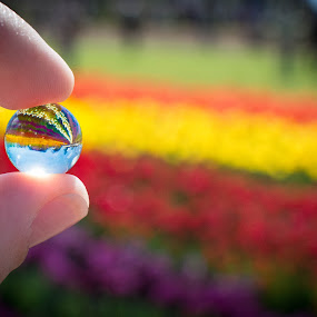 Bubble with a view by Eliza Jane - Artistic Objects Glass ( purple, bright, green, horizon, yellow, tulips, tulips festical garden flowers bright colours purple red green yellow sky horzion closeup  hands fingers glass bead view blue, colours, sky, bead, red, glass, cloud, festival, flowers, garden )