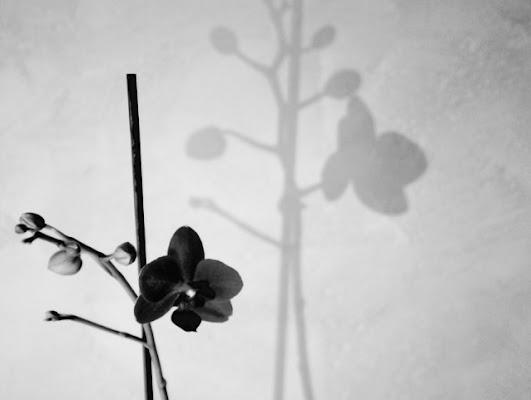 L'ombra del fiore perfetto! di elisa.sillen