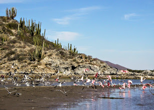 Photo: Roseate Spoonbills near camp.