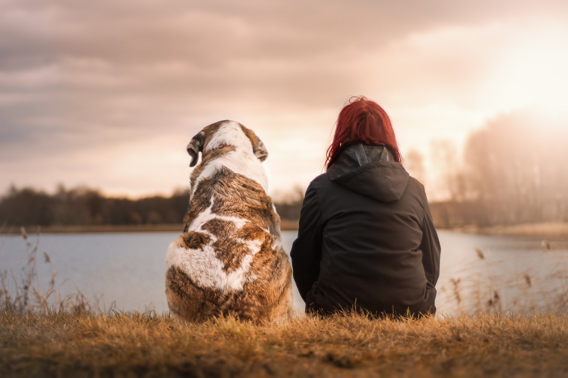 a dog sat with a woman