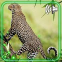 Jaguars Wild Cats icon