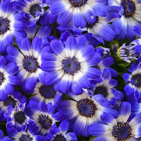 by Nil Jay - Flowers Flower Arangements