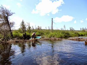 Photo: One of maybe 35 beaver dams we carried over. 10% were runnable.