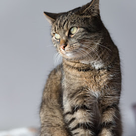 by Thomas Berwein - Animals - Cats Portraits