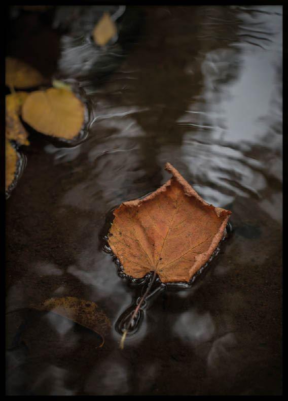 Poster, Autumn
