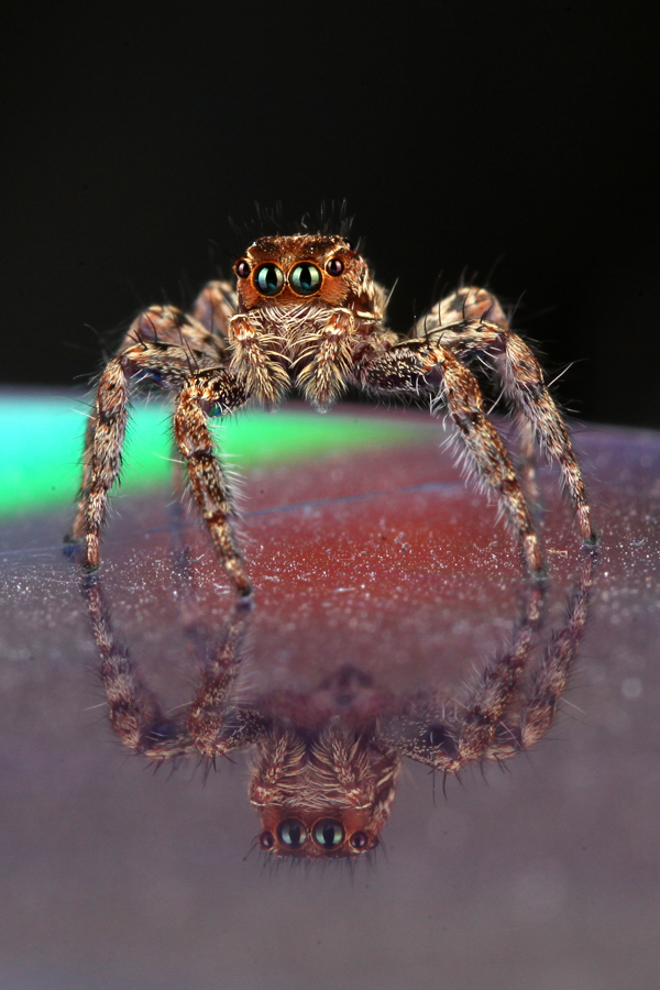 by Kori Kontek - Animals Insects & Spiders
