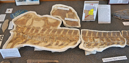 Photo: Plesiosaurus is a genus of extinct, large marine sauropterygian reptile that lived during the early part of the Jurassic Period. It is distinguishable by its small head, long and slender neck, broad turtle-like body, a short tail, and two pairs of large, elongated paddles. (See next photo to read text.)