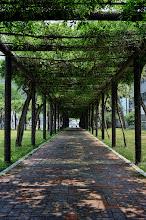 Photo: A path shaded with shrubs in Okayama, Japan