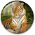 Animals HD Live Wallpaper file APK Free for PC, smart TV Download