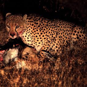 DINNER ! by Kedar Banerjee - Novices Only Wildlife