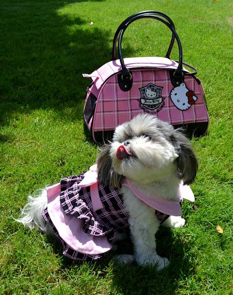 Photo: Hello Kitty Pet Ruffle Dress & Pet Carrier http://bit.ly/MMUM5O