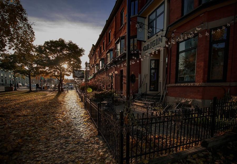 Early November 2 by Zoran Mrđanov - City,  Street & Park  Street Scenes ( city, weather, sun,  )