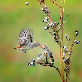 Feeding Time by Indrawaty Arifin - Animals Birds ( fly, feeding, birds,  )