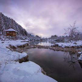 Winter Zelenci springs by Klemen Bandelj - Landscapes Waterscapes ( sunrise, forest, white, snow, winter, river )