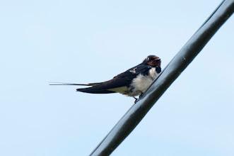 Photo: Swallow, Stockholm, SE