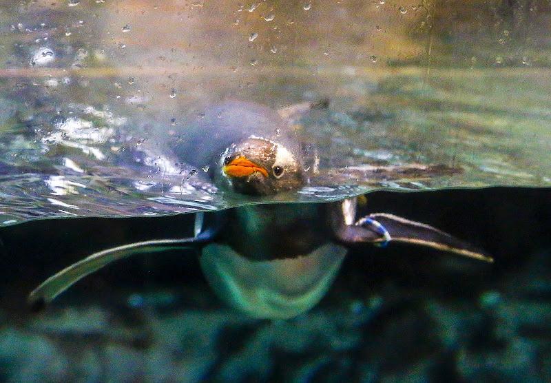 Nuotata quotidiana di np48