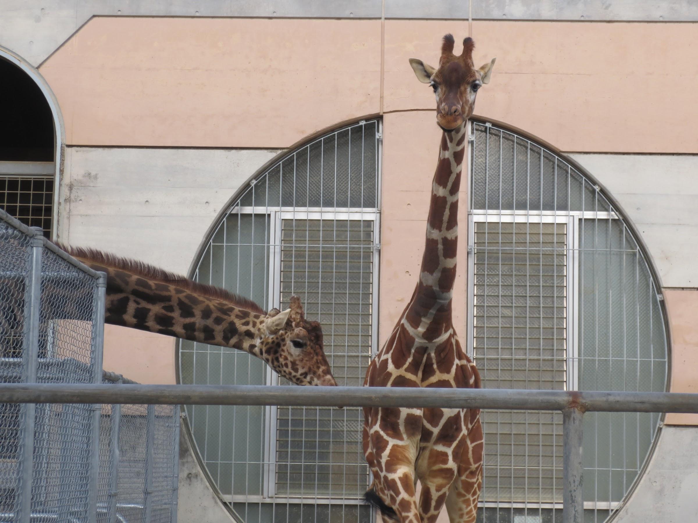 大牟田市動物園3