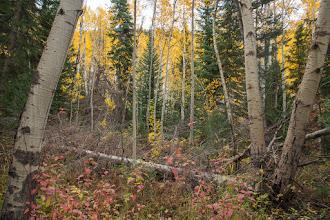 Photo: Woods near Fish Creek