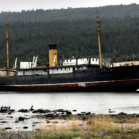 SS Kyle by Geoff Gosse - Transportation Boats ( newfoundland, ran aground, ship, harbour grace, ss kyle )