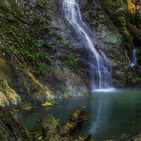 by Franciz Cayetano - Landscapes Forests (  )