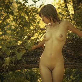 Summer by Dmitry Laudin - Nudes & Boudoir Artistic Nude ( body, nature. forest, nude, girl, tree, summer, heat, portrait, sun )
