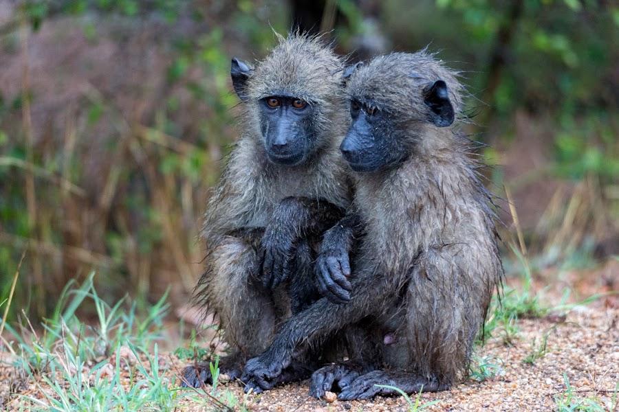 Wet Babies by Aneska Joubert - Animals Other Mammals