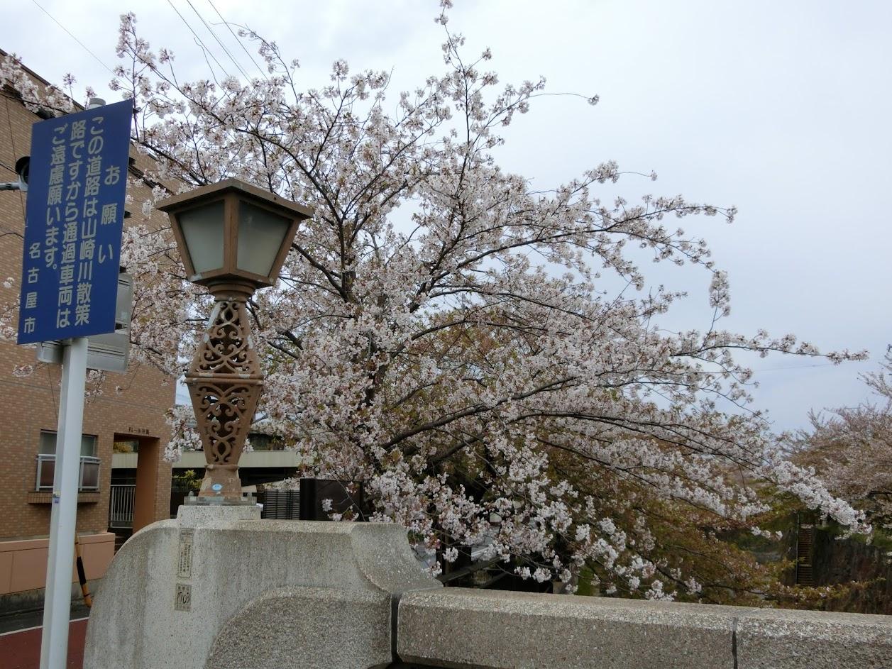 2019年4月中旬撮影の山崎川桜