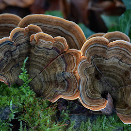 by Marco Bertamé - Nature Up Close Mushrooms & Fungi ( from above, moss, rounded, abstract, shroom, mushroom,  )
