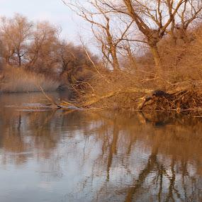 Danube Delta, Romania by Dorian Radu - Landscapes Waterscapes ( danube delta, romania )