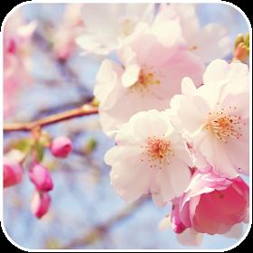 Pink Flower Wallpaper HD - Pink Flower Wallpapers