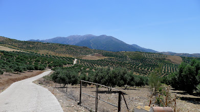 Photo: Beyond the olive grove the Sierra de Tejeda