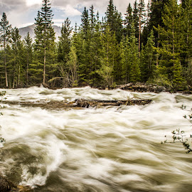 RAGING by Jennifer  Loper  - Landscapes Waterscapes ( blue sky, mountains, rapids, rocks, fury, rockies, arkansas, headwaters, white water, river, clouds, trees )