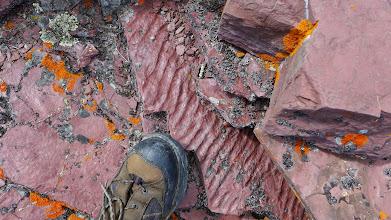 Photo: Ripple marks in argillite (Belt Formation)
