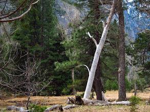 Photo: White (dead?) tree #3758
