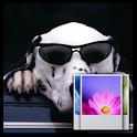 Cool Dog Wallpaper icon