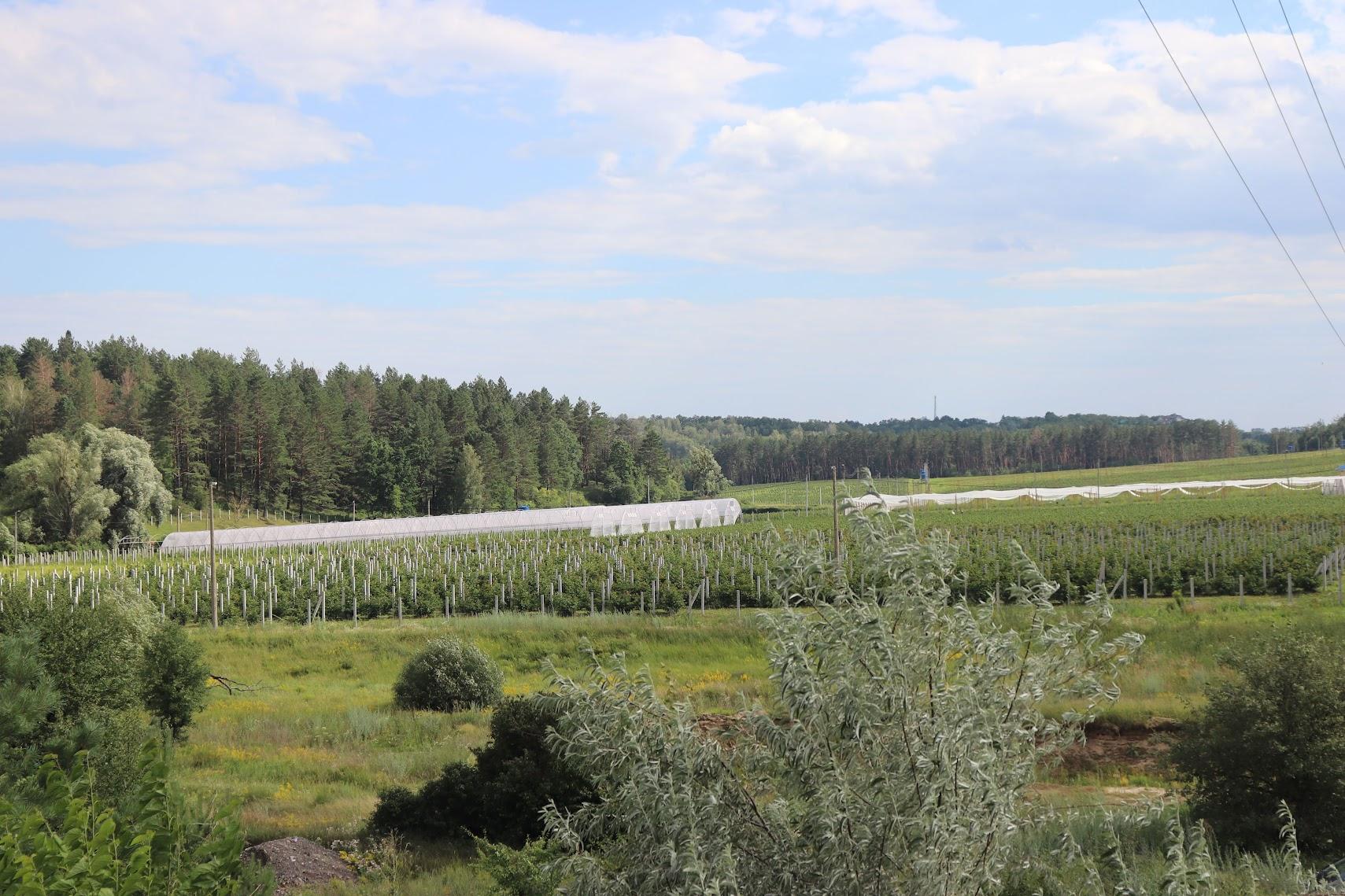 органическая ферма лига агро ягоды