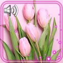 Tulips Pink Flowers icon