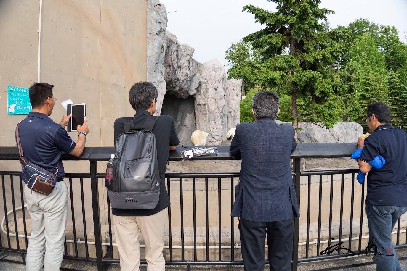 クマさんの行動に見入る男性4人