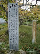 Photo: お多福桜