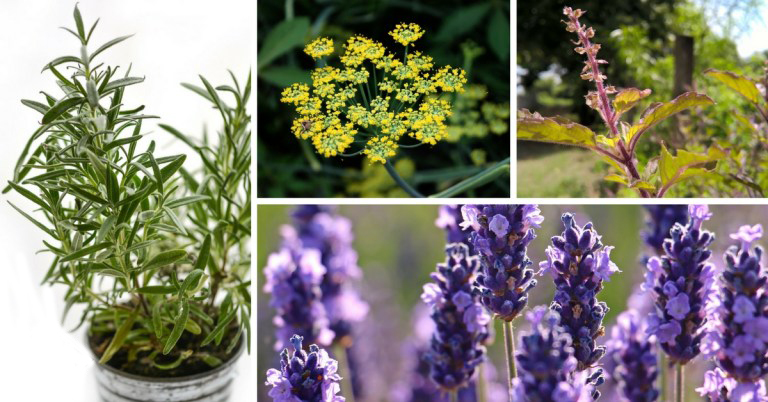 8 Top Medicinal Herbs You Should Grow
