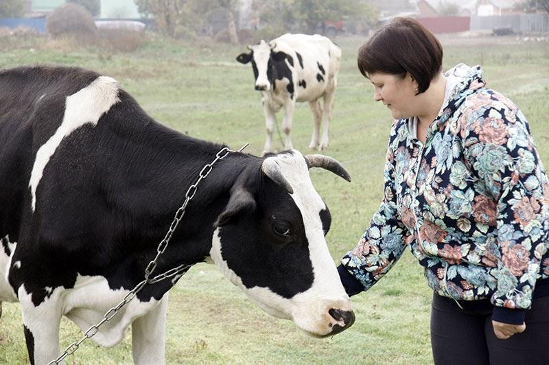 Днем буренки Елены Бердниковой пасутся в окрестностях поселка. Производство молока – хорошее подспорье для семьи