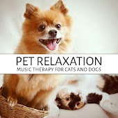 Pet Relaxation - Music Therapy for Cats and Dogs, Soothing Atmospheric Music, Morning Walk, Calm Down Your Animal Companion, Sleep Aids, Stress Relief