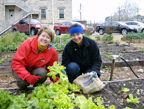 Photo: Harvesting all mature lettuce for the Food Pantry, 1/7/10